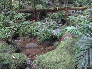 Mt Finnigan rainforest stream