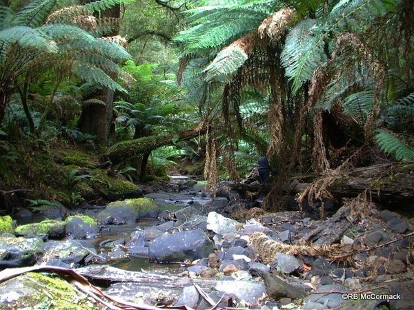 Youngs Creek, Great Otway National Park