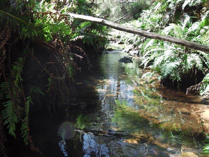 Leura Falls Creek