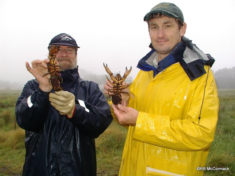 Rob McCormack (left) and Justin Stanger (right) with berried female Euastacus dharawalus
