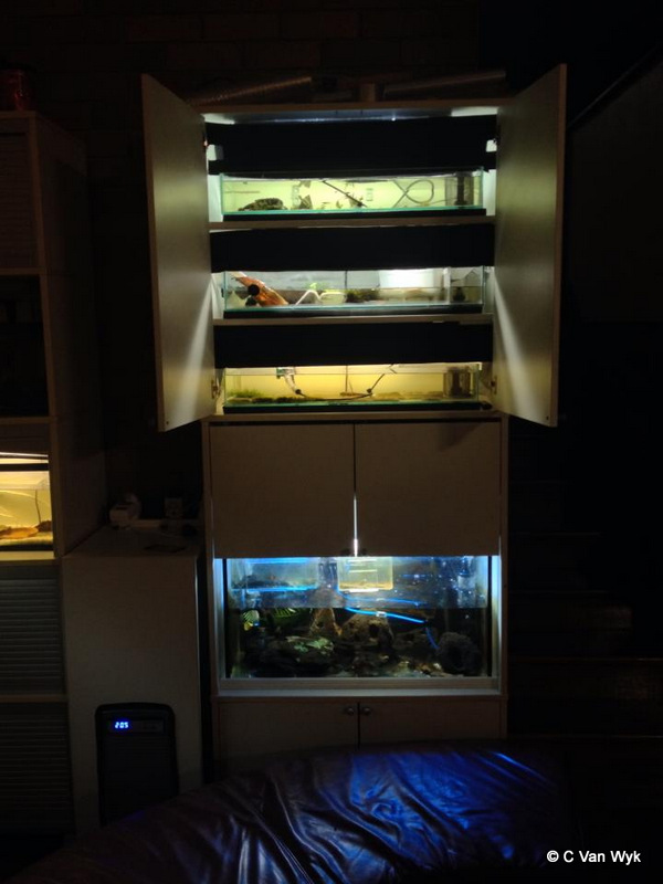 Chris's home aquarium