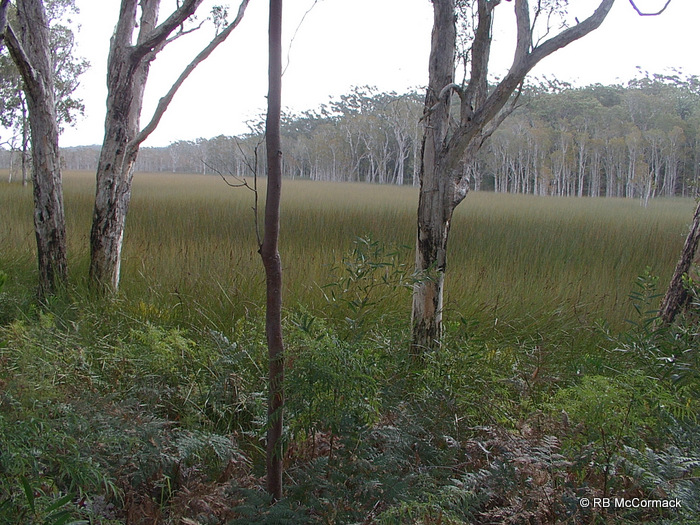 Typical coastal swamp habitat