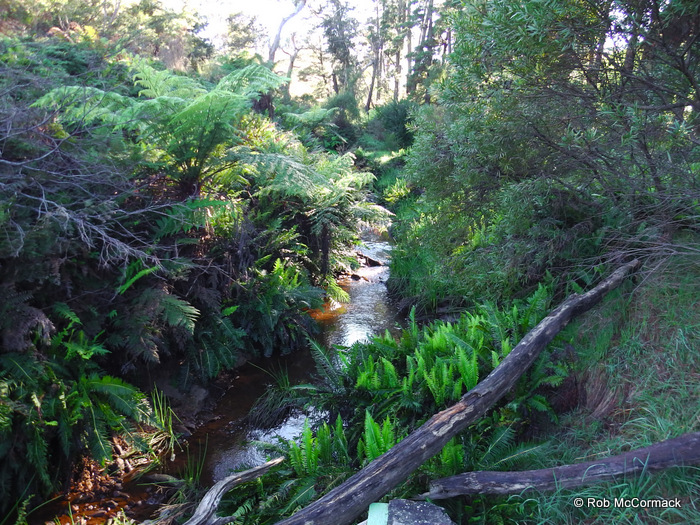 Jamison Creek, Wentworth Falls, NSW