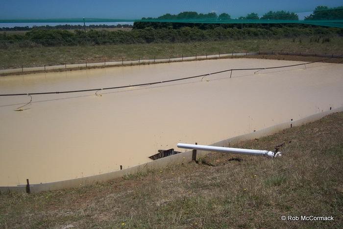A CSIRO yabby aquaculture pond