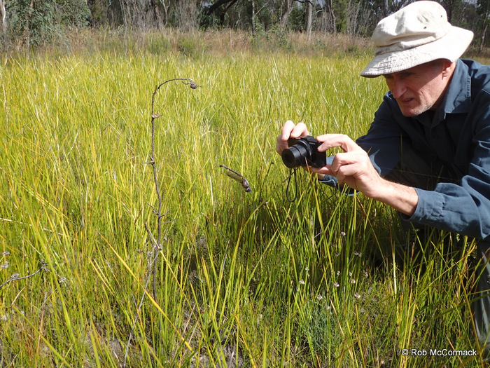 Ian Baird photographing a Giant Dragonfy caught in a spiders web