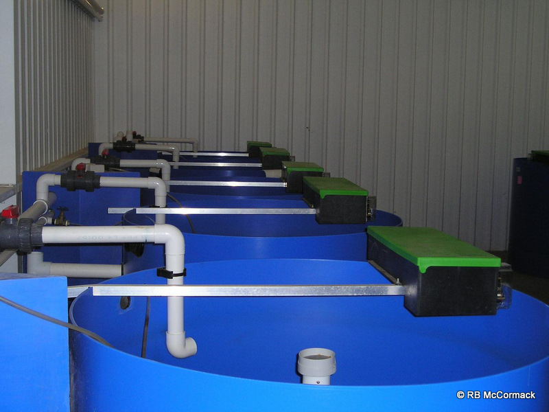 Weaning tanks with auto feeders