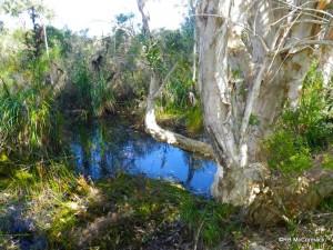 Swampy pools were full of life