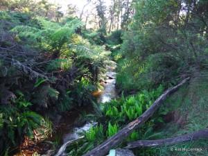 Jamison Creek, Wentworth Falls, NSW
