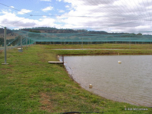 Purpose built commercial yabby ponds
