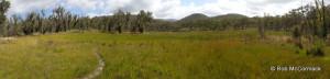 The Survey Swamp at Katoomba