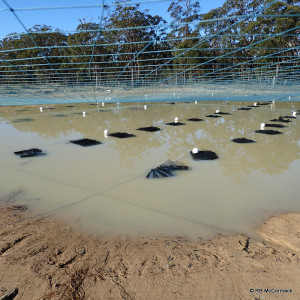 A commercial pond with bird netting over and hides within the pond