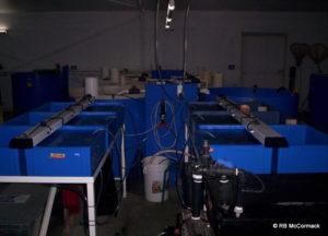 First larval rearing tanks